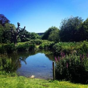 The 'secret lake' on UCD campus