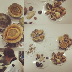 Limpets, whelks, limpets, barnacles, limpets... Never even heard of them until this lab!