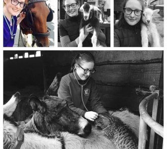 """Drink coffee, it's good for you"" – the final year of Veterinary Medicine"